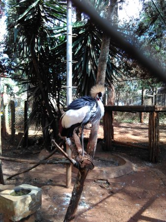 Nairobi Education Centre - Animal Orphanage: 漂亮的非洲丹顶鹤