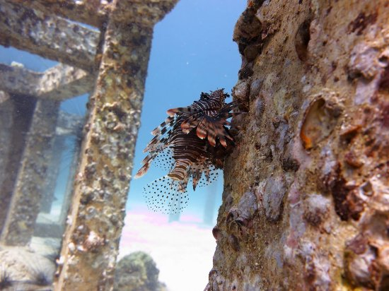 Choeng Thale, Thailand: 海底世界的美妙,Soul都会记录下来