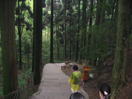 Mount Qingcheng: 台阶不高,两边都是树