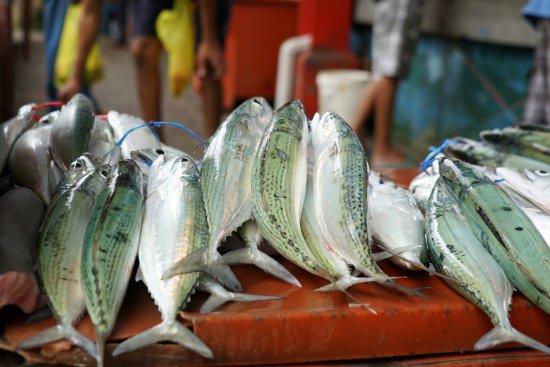 Victoria, Seychelles: 鱼市场