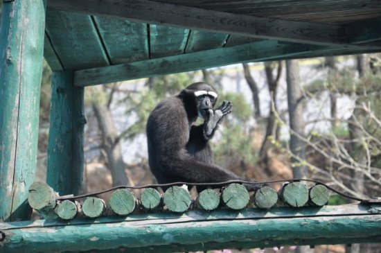 Rongcheng, China: 啥猴子,忘记了