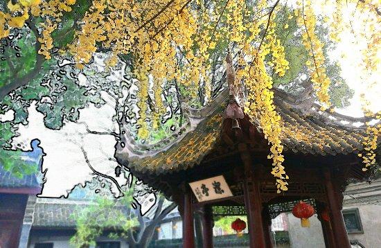 "Xiangyang, China: IMG_20161119_154704_1-01_mh1479552511898_large.jpg"""