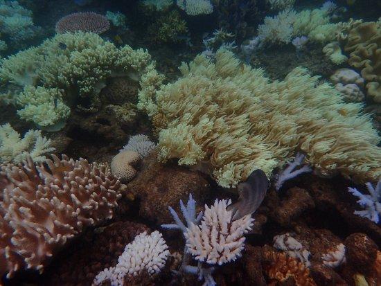 Cairns Region, Australia: photo8.jpg