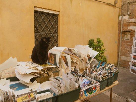 libreria Acqua alta Photo