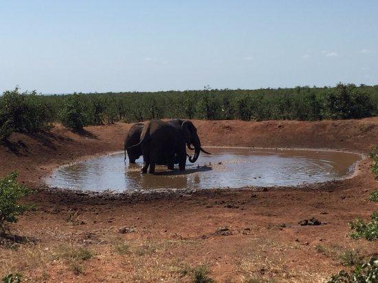Parque Nacional de Kruger, África do Sul: 两只水塘的大象