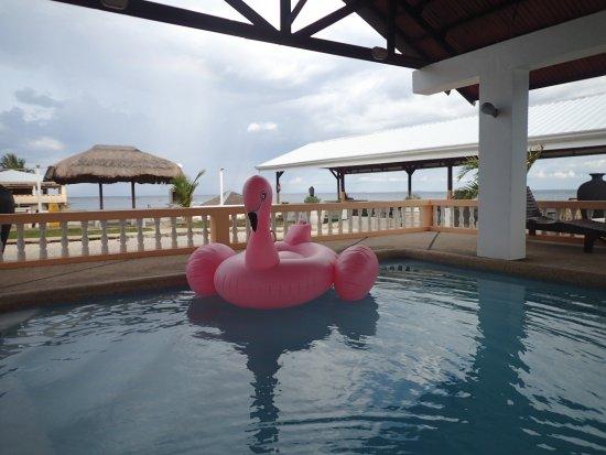 Dalaguete, Philippines: 泳池,当地小朋友每天会来玩水