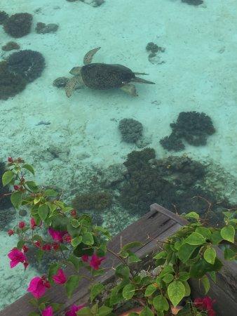 Sipadan Kapalai Dive Resort: photo1.jpg