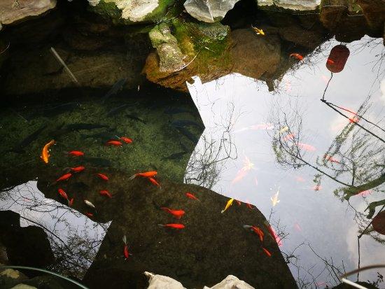 จี่หนาน, จีน: 五龙潭公园