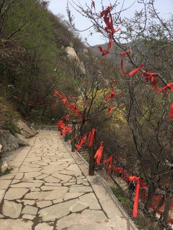 Yuncheng, Kina: 凤凰谷森林公园