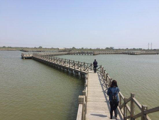 Dongying Huanghe Delta : 蜿蜒于水上的栈道,伴着彩舟云淡,游弋于湿地之中。