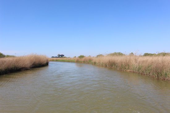 Dongying Huanghe Delta : 坐着游船,置身芦苇荡中,享受着大自然带给我们的静谧与安详