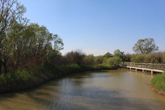 东营黄河三角洲