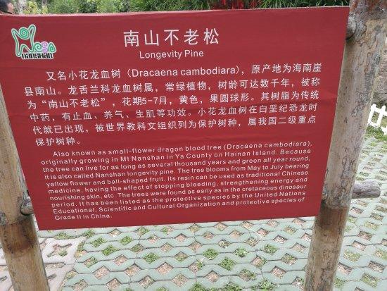 ซานย่า, จีน: IMG_20170423_121755_large.jpg