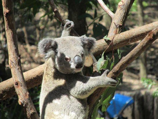 Currumbin, Avustralya: 看镜头