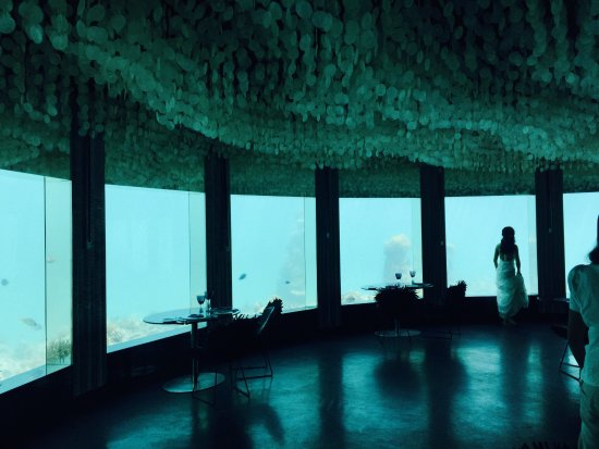 Niyama Private Islands Maldives: Wonderful paradise!