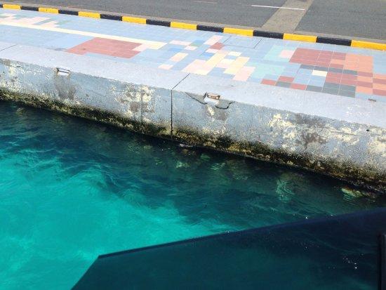 Kaafu Atoll: 码头水