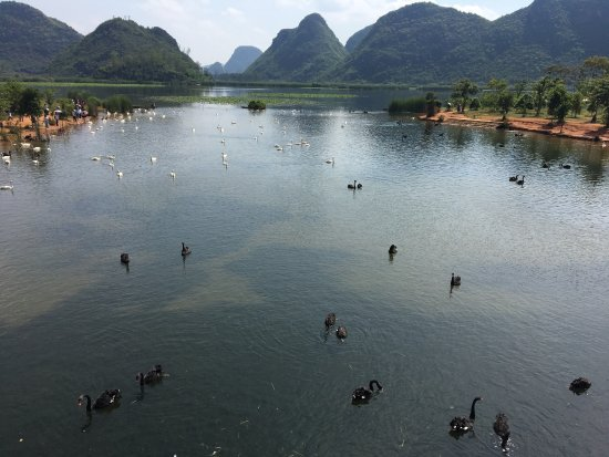 Qiubei County, China: 普者黑景区
