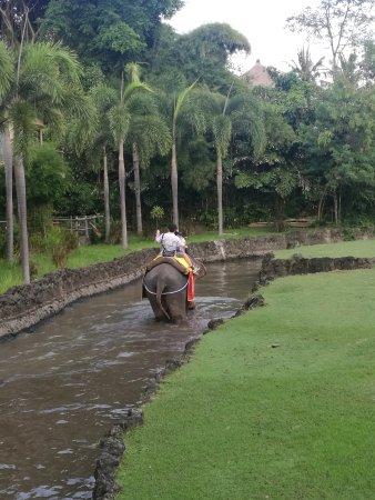 Mara River Safari Lodge: 骑大象吃早餐路上