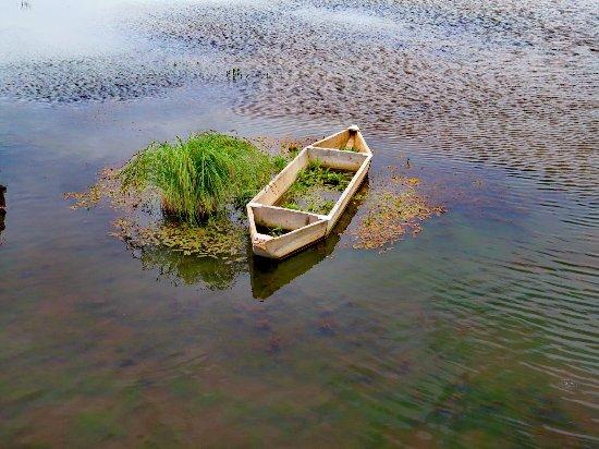 Ruoergai Wetland Reserve : 若尔盖花湖
