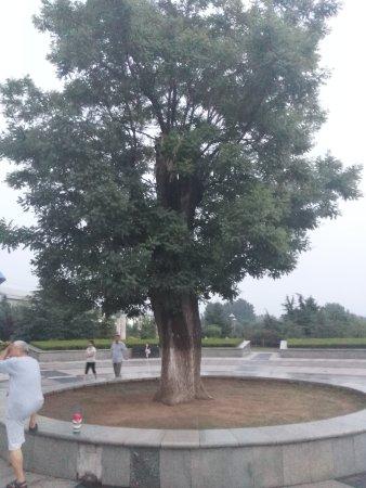Laiwu, Chiny: IMG_20170622_193609_large.jpg