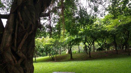 Shenzhen Lianhuashan Park: 小道~