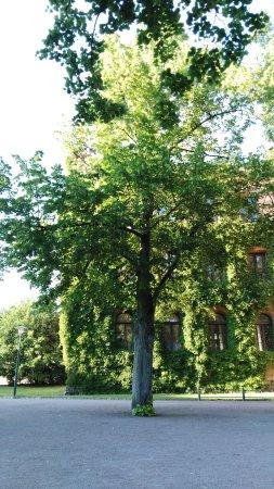 Λουντ, Σουηδία: IMG_20170715_191951_1_large.jpg