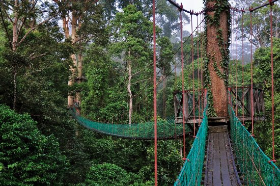 Danum Valley, Sabah - Places to Visit in Malaysia