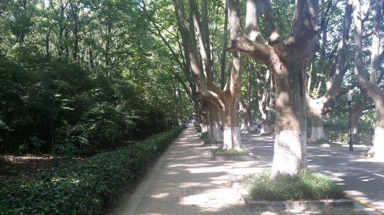 南京市照片