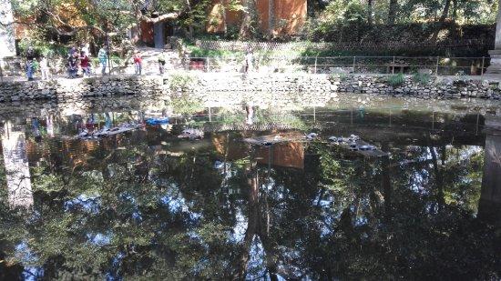 Tiantai County, China: 寺院放生池