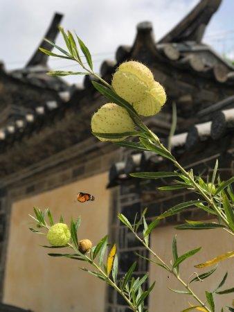 Jianshui County, China: photo4.jpg