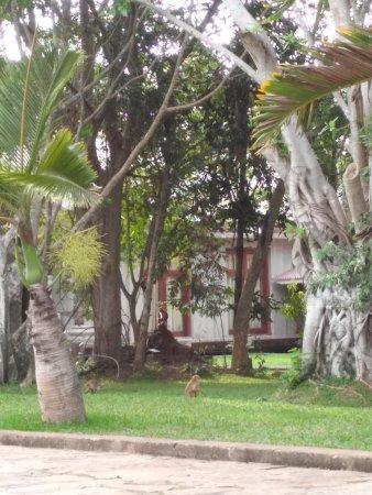 Palm Garden Village Hotel : IMG_20170811_170520R_large.jpg