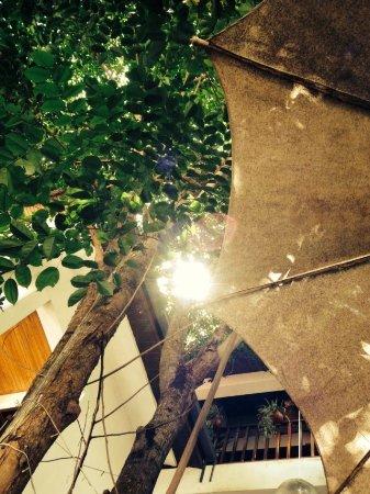 Jinghong, China: 听风,闻香,你——需要咖啡时间。