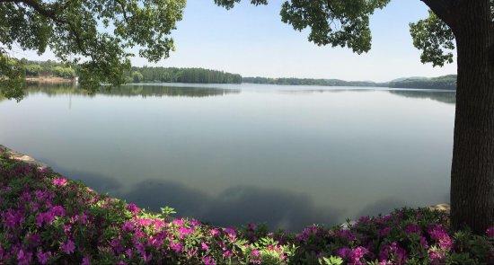 East Lake in Wuhan : 春暖花开,在东湖边骑车,拍摄的。