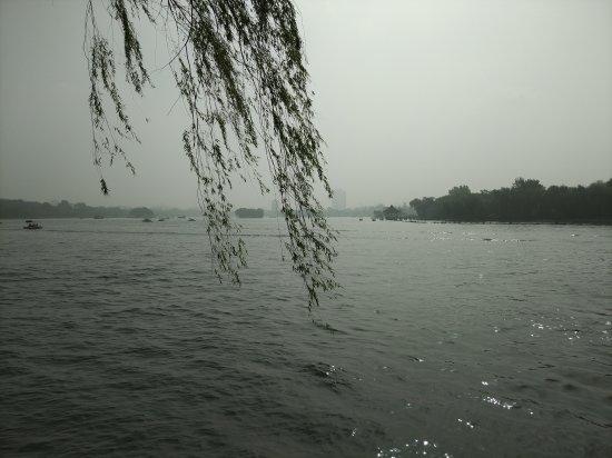 Daming Lake : 大明湖公园