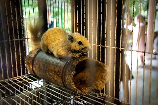 Sanya, China: 三亚宋城彩色动物世界