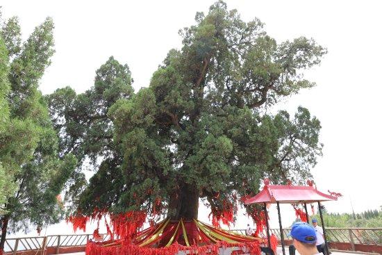 Ruicheng County, Cina: 大禹曾在树下查勘水势