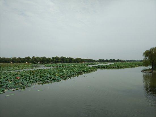 Anxin County, China: 白洋淀景区