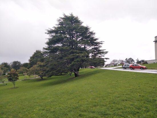 Auckland Domain: 中央公园1