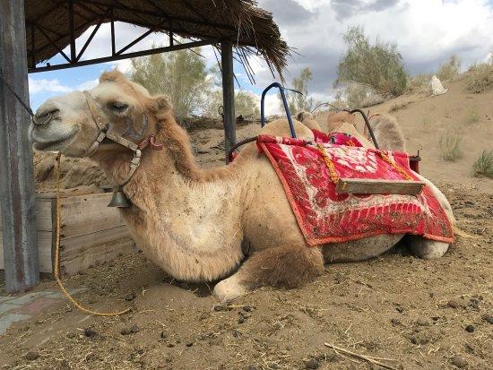 Karamay, Kina: 驼铃梦坡沙漠公园