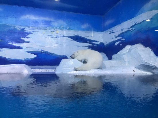 ‪Tianjin Haichang Polar Ocean World‬