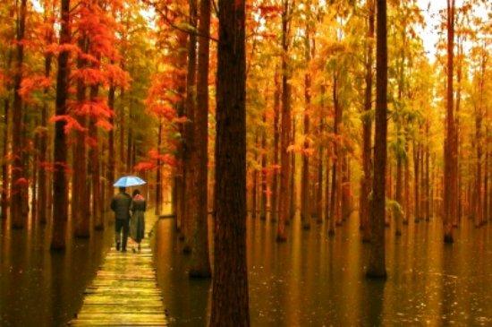Jiangdu, China: 春秋季节的渌洋湖水上原始森林