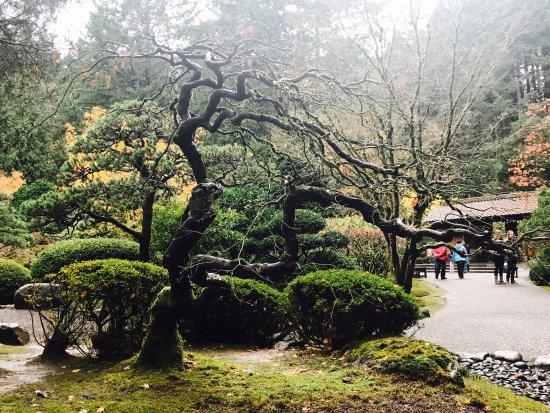 Picture Of Portland Japanese Garden Portland Tripadvisor