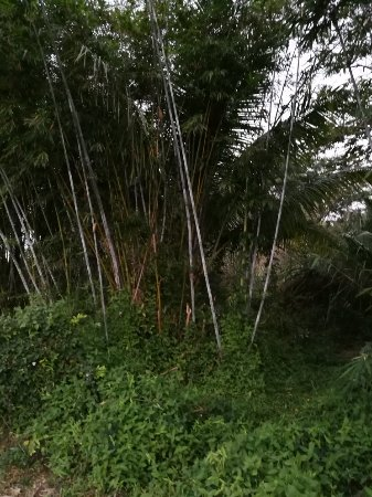 Wanning, Cina: 兴隆景天酒店