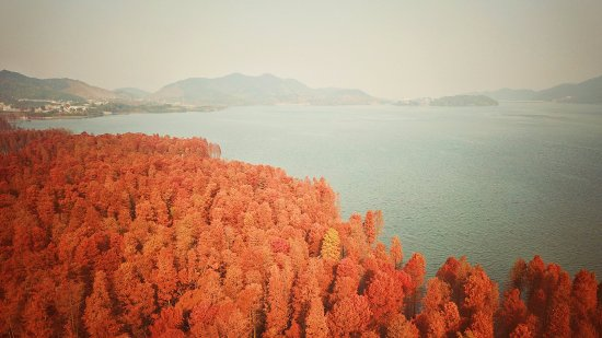 Siming Lake: 四明湖红杉林