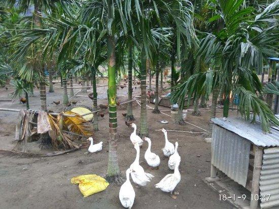 Baoting County, Çin: mmexport1515569561606_large.jpg