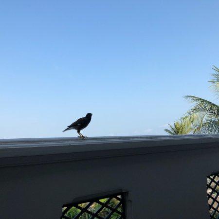 Centara Grand Beach Resort Samui : photo4.jpg