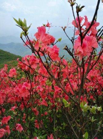 Youxian Terraced Field : 攸县梯田