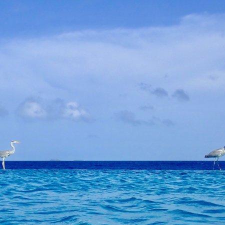 Huvafen Fushi Maldives: 芙花芬岛PER AQUUM度假酒店