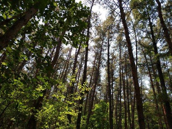 Mao'er Mountain National Forest Park Foto