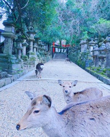 Nara Prefecture, Japan: 春日大社